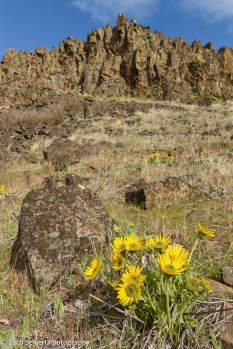 A cluster of large, yellow, daisy-like flowers sits next to a boulder at the base of a tall cliff of brown rocks.
