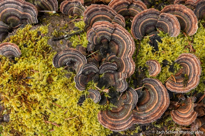 Fungus and moss grows on a rotten log on the forest floor