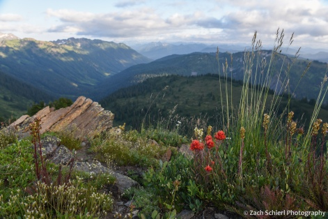 A variey of wildflowers on a ridge looking down into the valley of the Little Wenatchee River.