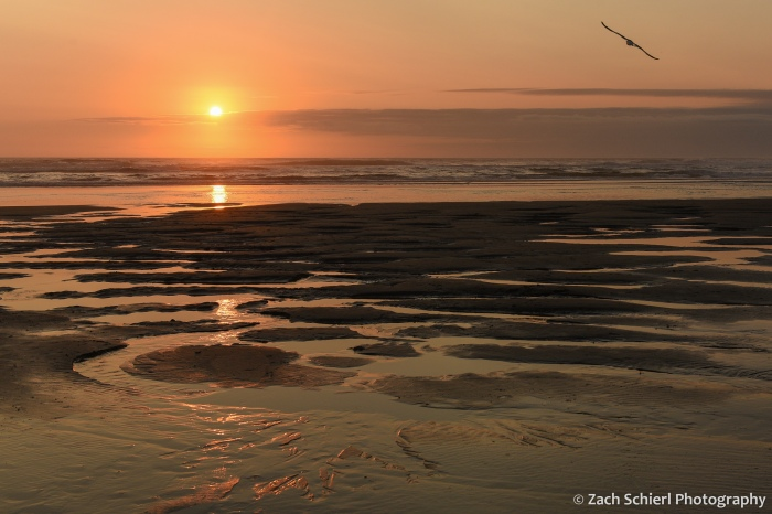 A red and orage sky at sunset is reflected in pools of water along the beach as a bird soars overhead