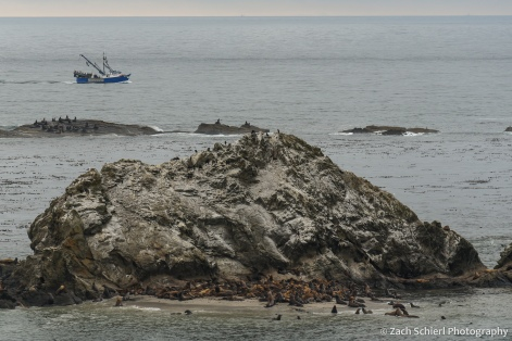 Sea lions and fur seals hauled out near Simpson Reef. This is supposedly the largest haul-out site for sea lions along the Oregon Coast, and boy were they loud! Even from a mile away!